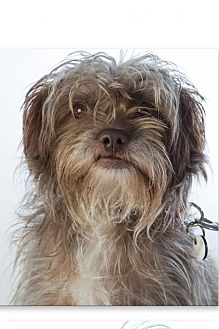 Terrier (Unknown Type, Medium) Mix Dog for adoption in Midway City, California - Donnie