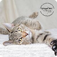Adopt A Pet :: Dixie - Apache Junction, AZ