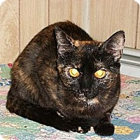 Domestic Shorthair Cat for adoption in Watsontown, Pennsylvania - Lisa