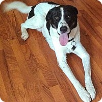 Adopt A Pet :: Thor - Austin, AR