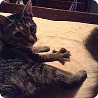 Adopt A Pet :: Vertigo - Pittstown, NJ