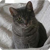 Adopt A Pet :: Hemmingway - Monroe, GA
