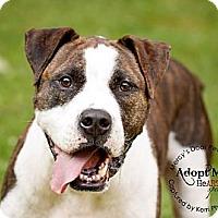 Adopt A Pet :: Rock - Medina, OH