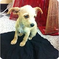 Adopt A Pet :: Sammie - Oceanside, CA