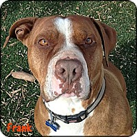 Adopt A Pet :: Frank - West Hills, CA