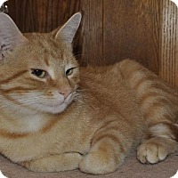 Adopt A Pet :: Oliver - Abrams, WI