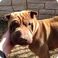 Adopt A Pet :: Spirit in TX - adopt pending - Mira Loma, CA