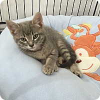 Adopt A Pet :: Ellis - Speonk, NY
