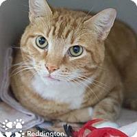 Adopt A Pet :: Reddington - Merrifield, VA