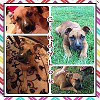 Adopt A Pet :: Cindy Lou in CT - Manchester, CT