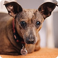 Adopt A Pet :: Tippy - Portland, OR