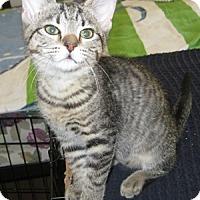 Adopt A Pet :: Kerry - North Highlands, CA