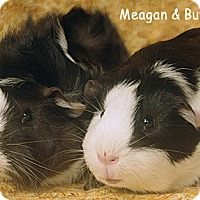 Adopt A Pet :: Meagan & Buffy - Santa Barbara, CA