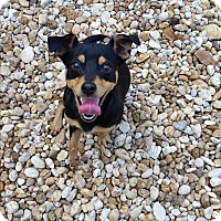 Adopt A Pet :: rick - Palmetto Bay, FL
