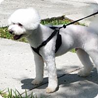 Adopt A Pet :: CUBBY - Melbourne, FL