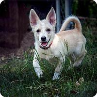 Adopt A Pet :: Jenna - Boulder, CO