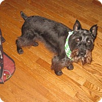Adopt A Pet :: ROBBIE (SRC#1589) IN NORTH CAROLINA - Lenoir, NC