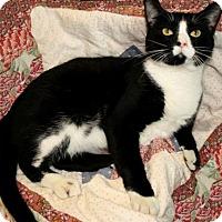 Adopt A Pet :: Jessie - Bradenton, FL