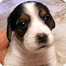 Adopt A Pet :: Baby Blue's Boss