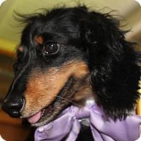 Adopt A Pet :: Cody-Adoption Pending - Marcellus, MI