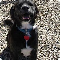 Adopt A Pet :: Samuel - Clear Lake, IA