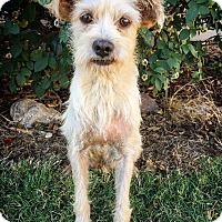 Adopt A Pet :: Pocus - Fredericksburg, TX