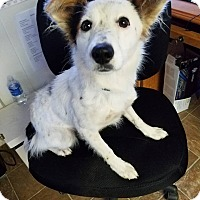 Adopt A Pet :: Elise - ST LOUIS, MO