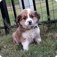 Adopt A Pet :: Cowboy JR - Durham, NC