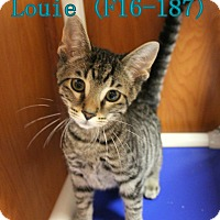 Adopt A Pet :: Louie - Tiffin, OH
