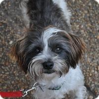 Adopt A Pet :: Cosmo - Atlanta, GA