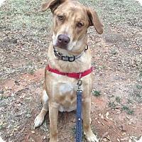 Adopt A Pet :: Rusty - Fayetteville, GA