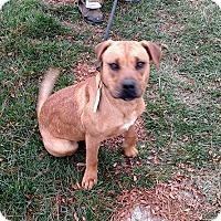 Adopt A Pet :: Sidney - Salem, OR