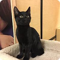 Adopt A Pet :: Panther - Jackson, NJ