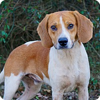Adopt A Pet :: Reilly - Westport, CT