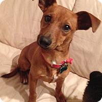 Adopt A Pet :: Freddy - Aurora, IL