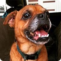 Adopt A Pet :: Virgil - Houston, TX