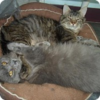 Adopt A Pet :: Lance and Louise Bonded Pair - Montello, WI