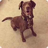 Adopt A Pet :: Prince - Laingsburg, MI