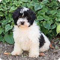 Adopt A Pet :: Tucker - Van Nuys, CA