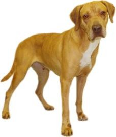 Hound (Unknown Type) Mix Dog for adoption in Inverness, Florida - Lilith
