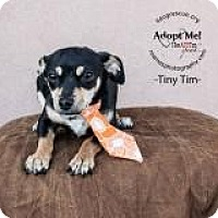 Adopt A Pet :: Tiny Tim - Shawnee Mission, KS