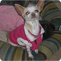 Adopt A Pet :: Honey - Rescue, CA