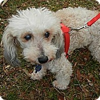 Adopt A Pet :: Gumdrop - Philadelphia, PA