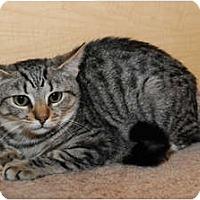 Adopt A Pet :: Bowser - Farmingdale, NY