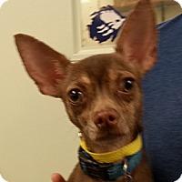 Adopt A Pet :: Cabo - Orlando, FL