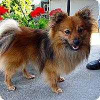 Adopt A Pet :: Rio - Gig Harbor, WA