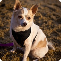 Adopt A Pet :: Princess - Orange, CA