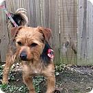 Adopt A Pet :: Buddy Plunk