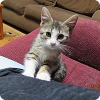Adopt A Pet :: Blinken - Southington, CT