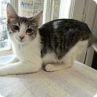 Adopt A Pet :: Bella - The Colony, TX